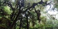 Tropical rainforest Sulawesi