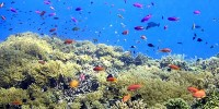 Inhabitants waters of Sulawesi