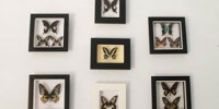 Bantimurung Butterfly Museum