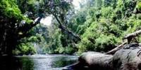 Murhum Great Forest Park