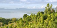 Murhum Great Forest Park, South East Sulawesi