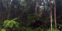 Rain Forest, Central Sulawesi