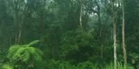 Cangar Forest at Wera Tour Park