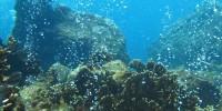 Corel Reef Under Sea Volcano