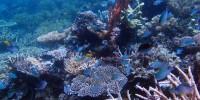 cluster of coral reef, mahangetang mount