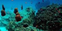 Various sea biota and cluster of coral reef