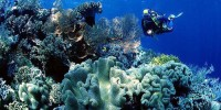 Diving at Wakatobi National Park