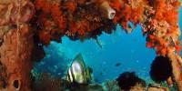Coral reef at Wakatobi